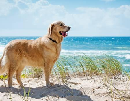 30a Pet Friendly Rentals